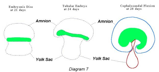 amnion formation A three-part animation depicting the development and function of the human placenta updated version can be found at  .